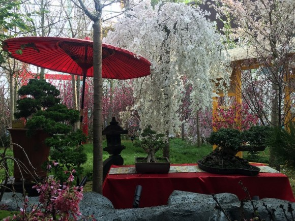 盆栽 桜 ガーデンズバイザベイ