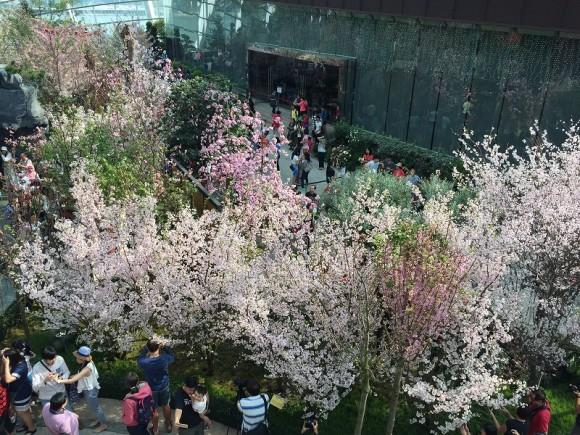 桜 ガーデンズバイザベイ